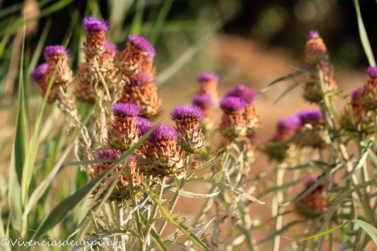 Flores salvajes