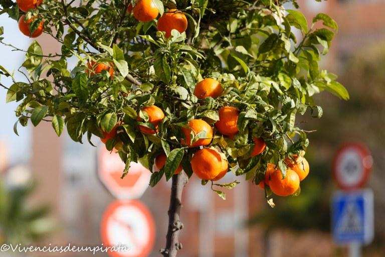 naranjos-de-ciudad