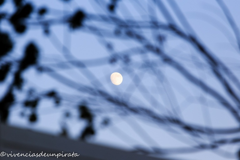 Luna entre ramas